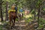 Horseback Trail Tour