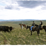experience-ranch-life